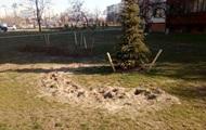 В сквере Киева украли сотни кустов можжевельника и сосны