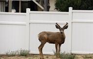 В Австралии домашний олень напал на своих хозяев