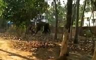 Голодный слон убил забывшего его покормить дрессировщика