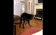 Сеть развеселила собака, укусившая себя за хвост
