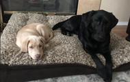 Реакция на подаренного щенка сделала пса звездой