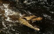 В Индонезии крокодил-людоед плавал с телом в пасти