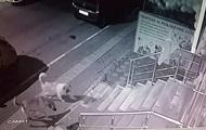 Напугавшего стаю собак кота сняли на видео