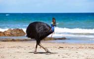 Убившую хозяина птицу продадут на аукционе