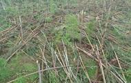 Ураган в Житомирской области привел к чрезвычайной ситуации