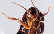 Живой таракан поселился в ухе вьетнамца