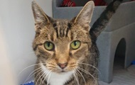 Постоянно чихающему коту из Британии не могут найти хозяев