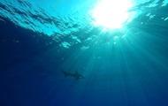 На Гавайях акула убила отдыхающего