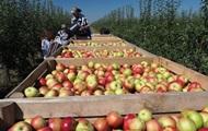 Украина резко нарастила импорт яблок