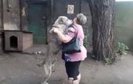 В Мариуполе украденный алабай через два года вернулся домой