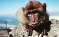 Логичное поведение обезьяны привело Сеть в восторг