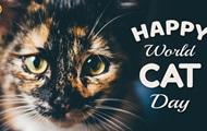 День кошек: история праздника и интересные факты