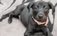 В Британии продали шестилапого щенка