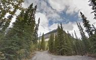В Канаде волк атаковал спящих в палатке туристов