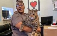 В США приют ищет хозяина для 12-килограммового кота