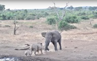 Драка слона и носорога в ЮАР попала на видео