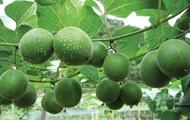 Ученые назвали замедляющий старение фрукт