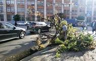 В Киеве сильный ветер повалил десятки деревьев