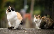 Кошки привязываются к людям не меньше собак – ученые