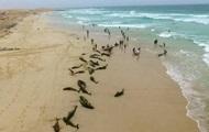 На курорте произошел массовый выброс дельфинов