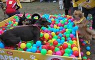 Кубок барбоса: в Киеве прошла выставка беспородных собак