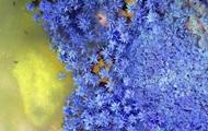 NASA показало красочные инфракрасные снимки Земли