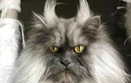 На Винничине кот задушил 9-месячного ребенка