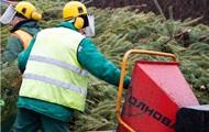 В Киеве утилизировали рекордное количество новогодних елок
