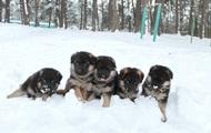У МВС розповіли, скільки собак служать на кордоні