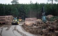 В Германии Tesla разрешили вырубку леса для строительства первого в Европе завода