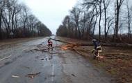 На Прикарпатье ветер повалил дерево на дорогу, есть пострадавшие
