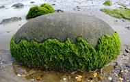 Знайдено найдавнішу водорість віком мільярд років