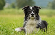 Британцы продали собаку в США за $25 000