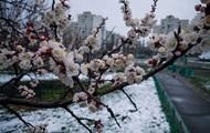 Синоптики: В понедельник возможны дожди, заморозки сохранятся