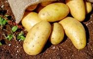 Мер Івано-Франківська дозволив городянам садити картоплю