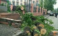 Опасный ветер: в Херсоне ребенка придавило деревом