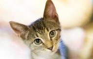 Коты могут заражать людей коронавирусом - ученые