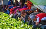 Германия продлила срок въезда для сезонных работников