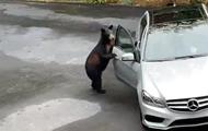 Ведмідь зламав автомобіль і хотів сісти в нього, але його злякали люди