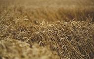 Україна відновила рекорд із експорту зерна