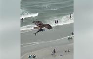 На видео сняли, как орел выхватил акулу из моря