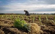 У Раді придумали новий податок для дрібних фермерів