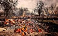 Лісові пожежі: на Житомирщині оцінили збитки в мільярд