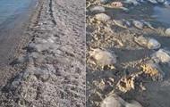 На пляжах Азовського моря знову навала медуз