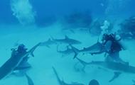 Тайсон сразился с акулами в глубине океана в рамках шоу Discovery. Видео