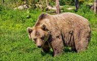 Медведь вышел из леса и поел за столом с людьми