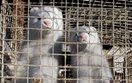 Франція заборонить хутряні ферми й диких тварин у цирках