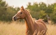 Франция расследует жестокие убийства лошадей