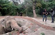 Шер освободила  самого одинокого слона в мире
