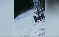Медведь устроил погоню за туристом в Румынии